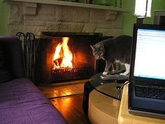 Since construction of our new bathroom is right next to my home office, I was forced to relocate temporarily. Soft purple couch, warm roaring fire, laptop, and pussycat. Does it get any better than this?{Love your Pin. Work From Home Jobs, Make Money From Home, Way To Make Money, Quick Money, Extra Money, Purple Couch, Cheer Someone Up, Flexible Working, Nursing Jobs