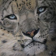 Altai Majesty - Wild Glance | Diana Höhlig