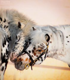 Freckle faced horses! As a freckle face myself, I can't help thinking they are gorgeous. by Olga Latina