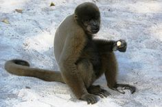 Amazon Monkey Reserve – travelogue with photos – World Adventurers [16 photos]
