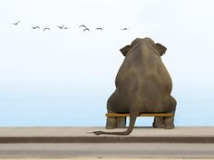 Elephant on a small Bench Birds Water