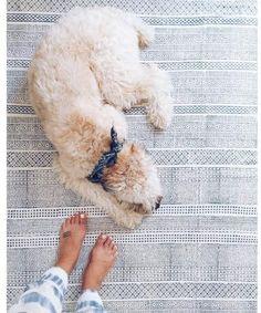 Bayside stripe rug, coastal home decor. #afflink