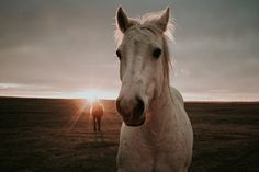 Horses in the field Medicine Hat Alberta by Maria St. Wander, Fields, Wolf, Medicine, Southern, Around The Worlds, Horses, Hat, Sunset