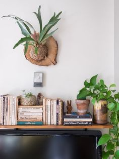5 Pet-Safe Plants (& How to Keep Your Furry Friends Away from Them, Anyway) - Modern Aspen House, Staghorn Fern, Urban Apartment, Apartment Plants, Interior And Exterior, Interior Design, Ski Chalet, Pet Safe, Home And Deco