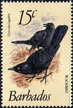 Barbados 1979 Birds SG 627a Fine Mint SG 627a Scott 570 Other British Commonwealth Empire and Colonial stamps Here