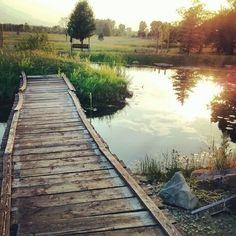 bridge, water, sunset, trees