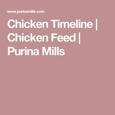 Chicken Timeline | Chicken Feed | Purina Mills
