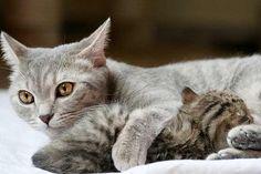 Katzenkind Katzenbaby