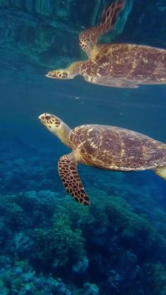 Beautiful Sea Creatures, Animals Beautiful, Cute Animals, Underwater Tattoo, Sea Turtle Pictures, Sea Video, Turtle Conservation, Tropical Freshwater Fish, Virtual Field Trips
