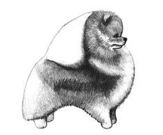 Pomeranian structure.