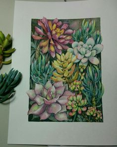 selection of succulents from the garden. Framed it and hoping to sell it in a local exhibition this month. Succulents Drawing, Watercolor Succulents, Watercolor Flowers, Succulents Painting, Arches Watercolor Paper, Watercolor And Ink, Watercolor Paintings, Plant Illustration, Botanical Art