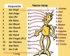 Deutsch lernen: Части тела, здоровье. Körperteile- Krankheit