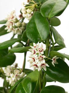 De tio bästa blommande krukväxterna för nybörjare | Wexthuset Plants, House Plants, Indoor Plants