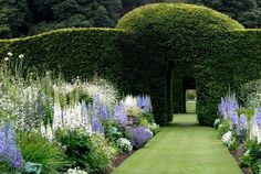 "kristina anne jennifer cook: ""Levens Hall and Gardens, Cumbria, England . Most of my favourite hedges are ones you can literally walk…"""