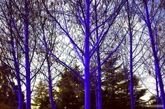 Stunning Electric Blue Trees Spring up in Seattle | Inhabitat - Sustainable Design Innovation, Eco Architecture, Green Building