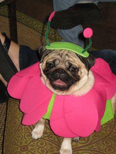 Is that an alien? Beagle, Pirates, Halloween, Pets, Friends, Amigos, Beagle Hound, Boyfriends, Beagles