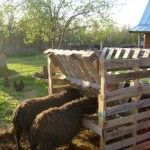 For a goat bale feeder!! Why didn't i think of that! pallets....