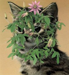 Chicago-based artist Stephen Eichhorn makes surprising collages, drawing inspiration from houseplant guides and books about cats Cactus, Cat Plants, Image Chat, Still In Love, Animal Projects, Vintage Cat, Photo Projects, Fashion Books, Creative Studio
