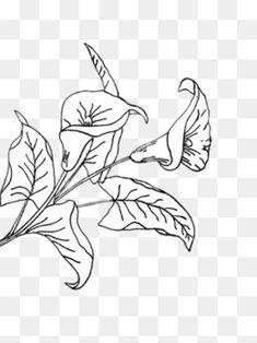 ручной росписью цветы, черно - белый, листья, простойИзображение PNG
