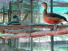 Phnom Tamao Wildlife Rescue Centre