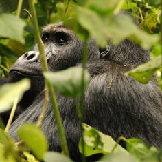 """""""We have one last opportunity to greatly reduce or even eliminate the human threats to primates and their habitats."""""""