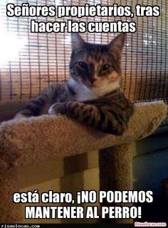 No te pierdas, El gato está claro que es más listo que el perro de la casa disfrutalo en nuestra web http://risaslocas.com/18210/el-gato-esta-claro-que-es-mas-listo-que-el-perro-de-la-casa