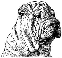 sharpei a great wall street journal illo of old Doodle Coloring, Coloring Pages, Cachorros Shar Pei, Cute Animal Tattoos, Fu Dog, Colored Pencil Techniques, Dog Tattoos, Dog Portraits, My Animal