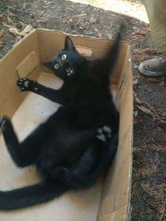 開けられてビックリ‼黒猫箱‼