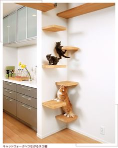 キャットウォークへつながるネコ棚 DUAL purpose home design...is it for knickknacks, books or CATS?!
