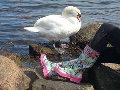 Boots having stand off with swan in Copenhagen
