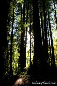 Redwood National Park in Northern California