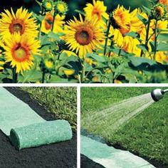 Rollout Sunflower Garden, Sunflower Mat, Easy Garden Flowers   Solutions