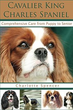 Cavalier King Charles Spaniel: Comprehensive Care from Puppy to Senior; Care, Health, Training, Behavior, Understanding, Grooming, Showing, Costs and much more by [Spencer, Charlotte]