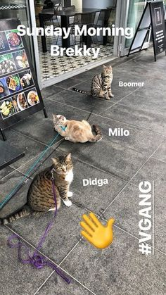 Our ritual. Is there a special place you take your cats? #kittens #pet #cats