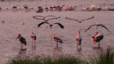 Marshland Click by KarunaKaran
