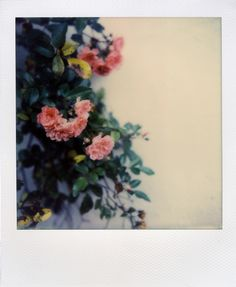 polaroidsandthoughts: polaroidsandthoughts: still in bloom Camera: Polaroid Film: Impossible Project NEW color protection. Sky Aesthetic, Flower Aesthetic, Aesthetic Images, Aesthetic Grunge, Aesthetic Vintage, Cool Pictures, Beautiful Pictures, Camera Icon, Polaroid Pictures