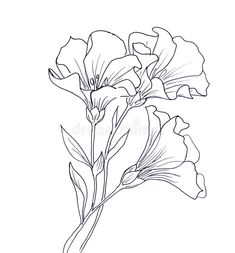 Line ink drawing of flower stock illustration. Illustration of . Easy Flower Drawings, Pencil Drawings Of Flowers, Flower Sketches, Drawing Sketches, Art Drawings, Drawing Flowers, Drawing Tips, Line Art Flowers, Flowers To Draw