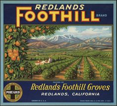 Fruit crate label advertising Pure Gold grade oranges showing orange groves and mountains.