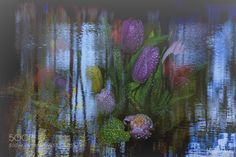 Spring. Tulip. Water. by v_znakomov Fine Art Photography #InfluentialLime