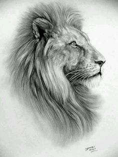 Lion - high quality emailed PDF cross stitch chart / pattern, original art by Darrel Bevan - drawings_pintous Lion Drawing, Painting & Drawing, Animal Drawings, Art Drawings, Lion Sketch, Lion Of Judah, Lion Art, Desenho Tattoo, Animal Tattoos