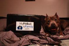 www.mypitbullisfamily.com