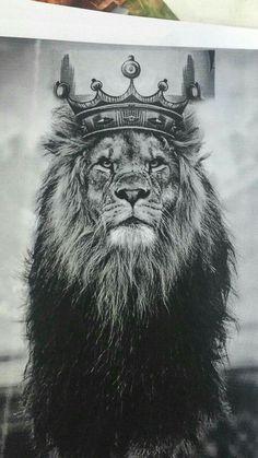 Lion of Judah Lion Images, Lion Pictures, Lion And Lioness, Lion Of Judah, Leo Lion, Animals Beautiful, Cute Animals, Wild Animals, Farm Animals
