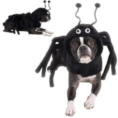 Dog Costume - Spidey Paws Dog Spider Halloween Costume - XS *** Find out more details by clicking the image : Costumes for dog