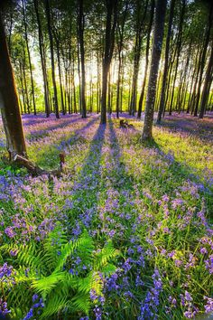 49 Ideas nature spring summer wild flowers for 2019 Beautiful World, Beautiful Places, Beautiful Forest, Beautiful Scenery, Natural Scenery, Animals Beautiful, Landscape Photography, Nature Photography, Scenic Photography