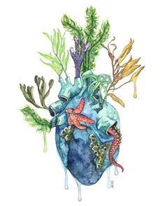 Watercolor Anatomical Heart Painting  by TheColorfulCatStudio