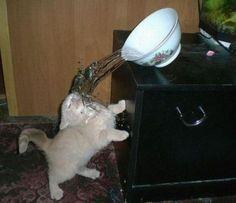Chatastrophe au bol d'eau