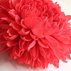 Chrysanthemum III: A bright coral chrysanthemum head. This piece took approximately 40 hours from start to finish. Made of Italian crepe paper by Tiffanie Turner.