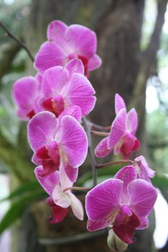 #Orchids in Costa Rica...the national flower
