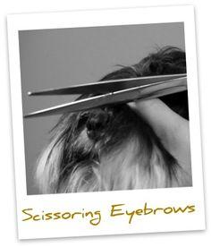 Miniature Schnauzer - How to groom those eyebrows
