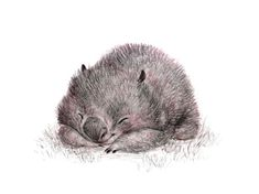 A little pencil sketch for Wombat Wednesday ~ Sydney Hanson
